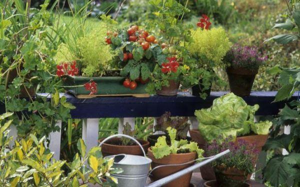 Warzywnik na balkonie – jak uprawiać warzywa na balkonie
