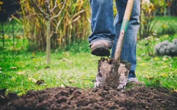 Przekopywanie ziemi w warzywniku jesienią